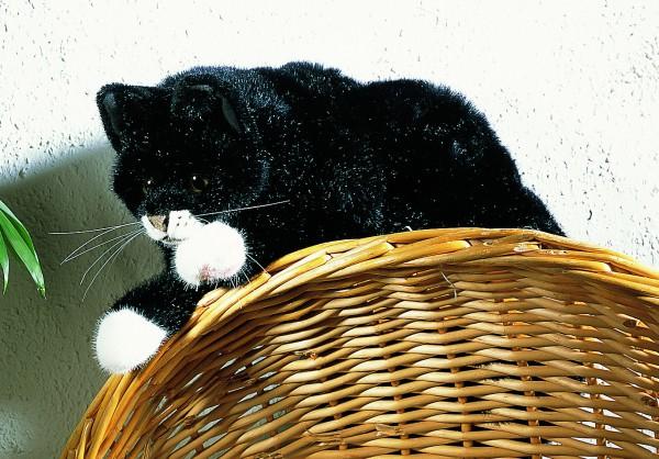 """Schwarze Katze """"Mohrle"""", liegend"""