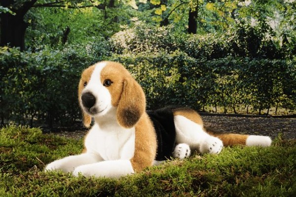Beagle, liegend
