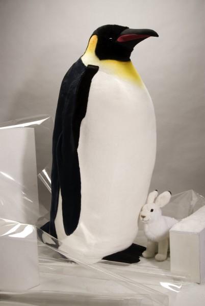 Pinguin - Studiotier