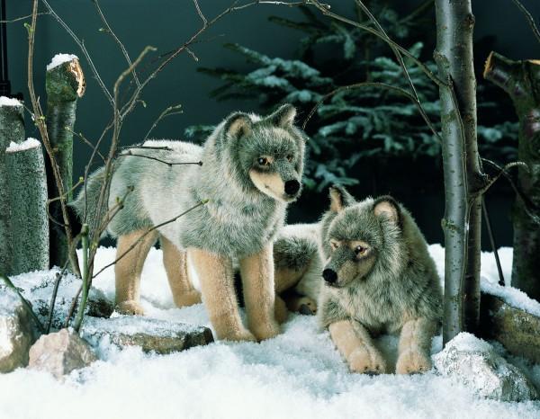 Wolf, stehend