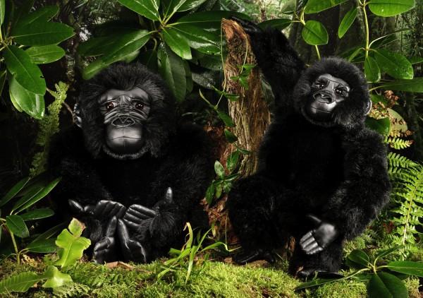 Gorilla, Kind
