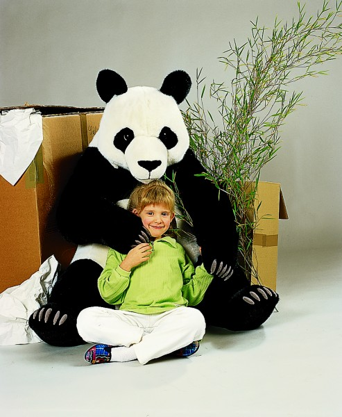 Panda - Studiotier