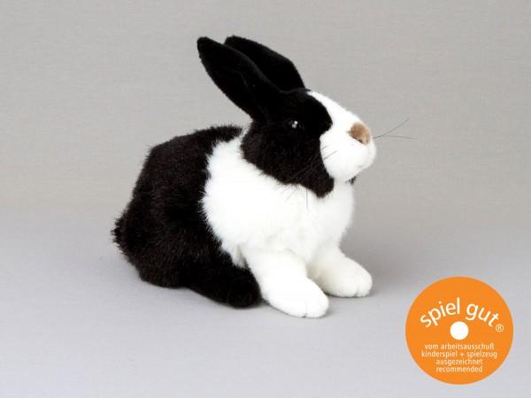 Holländer-Kaninchen