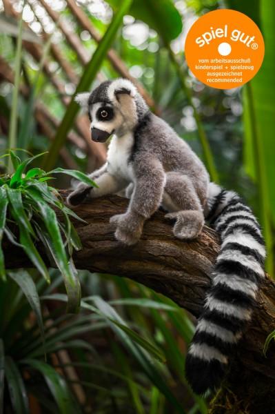 Lemur / Katta