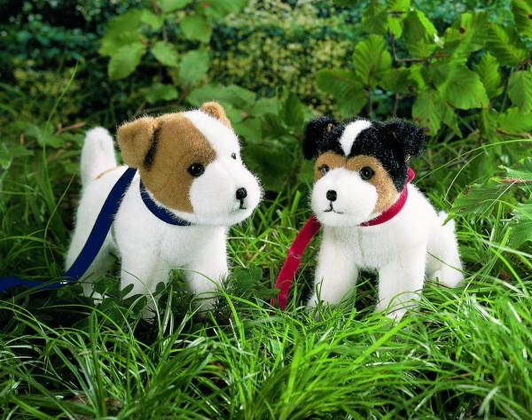 """Jack-Russel-Terrier """"Jacky"""", sitzend"""