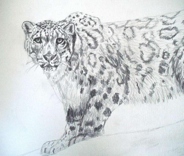 Bleistiftzeichnung Leopard