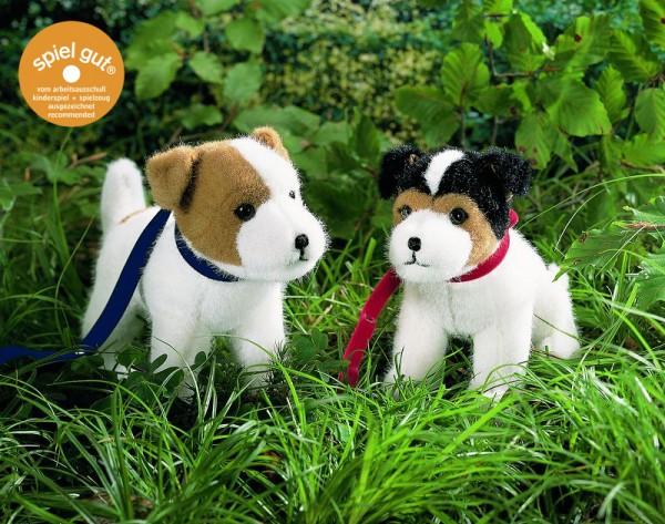 """Jack-Russel-Terrier """"Rusty"""", stehend"""