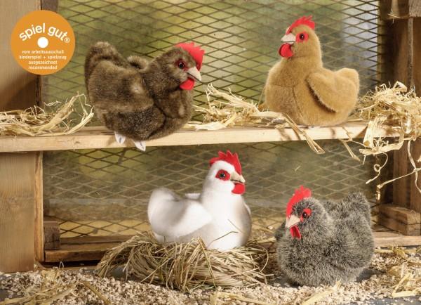 Huhn, klein braun