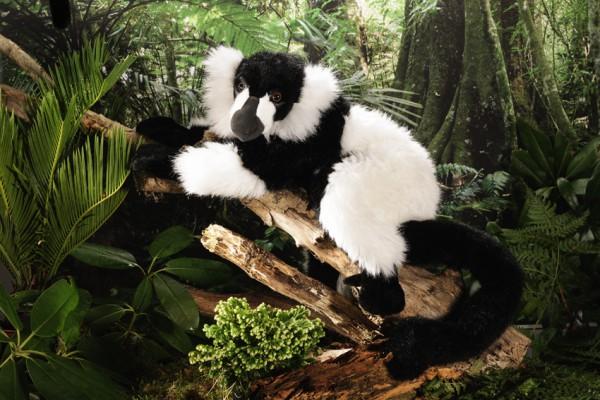 Lemur schwarz-weiß