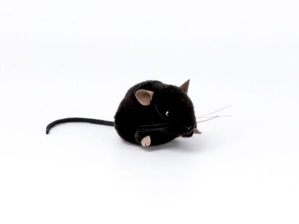 Maus, schwarz