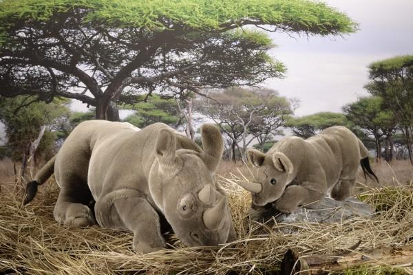 Nashorn, mittel, liegend