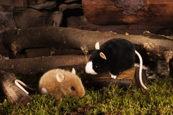 Maus, braun/weiß
