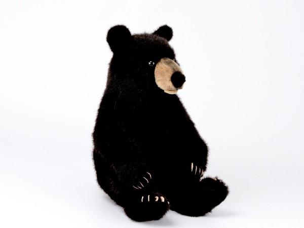 Schwarzbär, sitzend