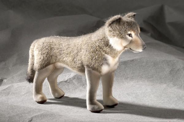 Wolf (Minitier)