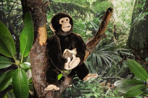 Schimpanse, klein